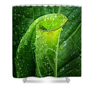Skunk Cabbage Square Shower Curtain