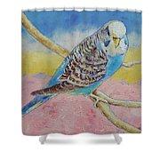 Sky Blue Budgie Shower Curtain