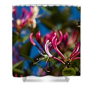 Sky Blue Pink Shower Curtain