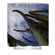Sky Cactus Shower Curtain