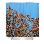 Sky Fall Shower Curtain
