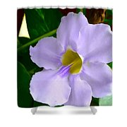Sky Flower Or Clock Vine Shower Curtain