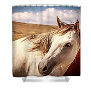 Sky Horse  Shower Curtain