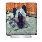 Skye Terrier Shower Curtain