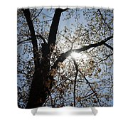 Skylight Shower Curtain