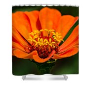 Skyphos Of The Olympian Gods - Featured 3 Shower Curtain