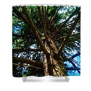 Skyward Spruce Shower Curtain