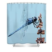 Slaty Skimmer Shower Curtain