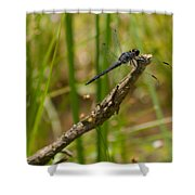 Slaty Skimmer Sunning Shower Curtain