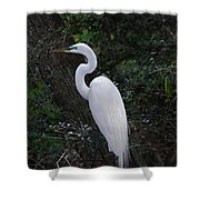 Sleek And Dressed To Please Shower Curtain