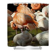 Sleeping Beauties Shower Curtain
