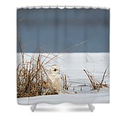 Sleeping Beauty Square Shower Curtain