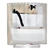 Sleeping Cat In Serifos Town Shower Curtain