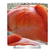 Sleeping Flamingo Shower Curtain