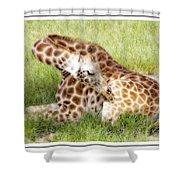 Sleeping Giraffe Shower Curtain