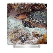 Sleeping Hawksbill Sea Turtle Shower Curtain