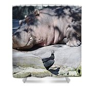 Sleeping Hippo Shower Curtain
