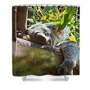 Sleeping Koala Shower Curtain