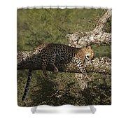 Sleeping Leopard Shower Curtain
