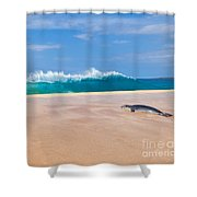 Sleeping Monk Seal At Papohaku Beach In Molokai Hawaii  Shower Curtain