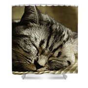 Sleeping Pet Shower Curtain