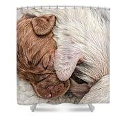 Sleeping Puppies Shower Curtain