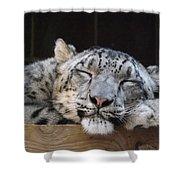 Sleeping Snow Leopard Shower Curtain