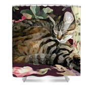 Sleeping Tabby Shower Curtain
