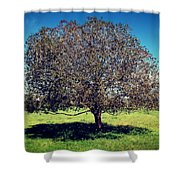 Sleeping Tree  Shower Curtain