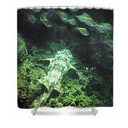 Sleeping Wobbegong And School Of Fish Shower Curtain