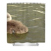 Sleepy Cygnet Shower Curtain