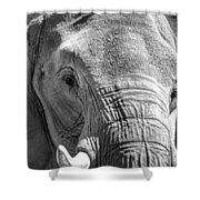 Sleepy Elephant Lady Black And White Shower Curtain