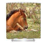 Sleepy Shower Curtain