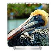 Sleepy Pelican Shower Curtain