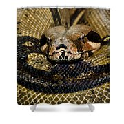 Sleepy Snake Shower Curtain