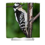Sleepy Woodpecker Shower Curtain