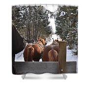 Sleigh Ride Dwn A Snowy Lane Shower Curtain