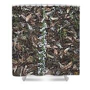 Slender Ladies Tresses Orchids Shower Curtain