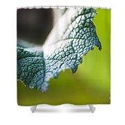 Slice Of Leaf Shower Curtain by John Wadleigh