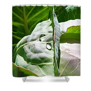 Sliced Cabbage Shower Curtain