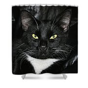 Slick The Black Cat Shower Curtain