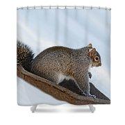 Sliding Squirrel Shower Curtain