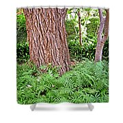 Slippery Elm And Ferns Shower Curtain