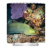 Slithering Moray Shower Curtain