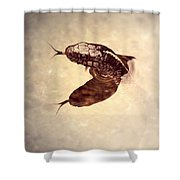 Slithering Reflections Shower Curtain