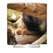 Sloth Bear Shower Curtain