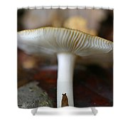 Slugs And Mushrooms Shower Curtain