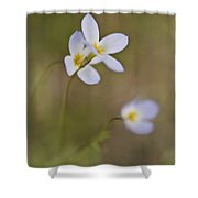Small And Blue Shower Curtain