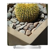 Small Barrel Cactus In Planter Shower Curtain