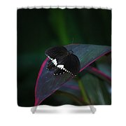 Small Black Butterfly Shower Curtain